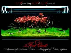 ada aquarium | ADA Aquarium by Massimo Faberi (2009)