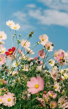 Try to stop and smell the flowers.Try to stop and smell the flowers. Flowers Nature, Wild Flowers, Beautiful Flowers, Bouquet Flowers, Cosmos Flowers, Flower Quotes, Flower Aesthetic, Flower Wallpaper, Summer Flowers