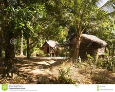 philippines jungle - Bing Images