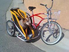 The Bicycle Mechanic: Bicycle Sidecars Cool Bicycles, Cool Bikes, Bike With Sidecar, Dog Bike Trailer, Mountain Bike Brands, Bike Cart, Biking With Dog, Tricycle Bike, Pets
