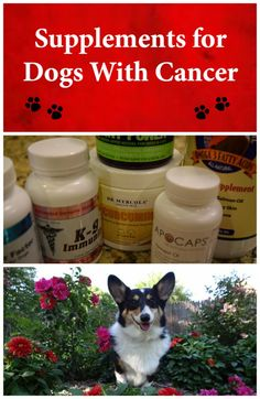 Dog cancer supplements. This is what I give my corgi Ty to help treat his lymphoma.