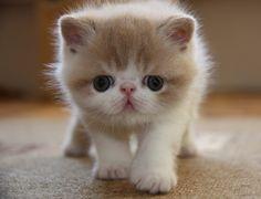OMG. Precious baby kitty