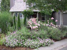 Bildresultat för roses and juniper