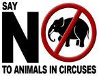 Petitioning HE President of India, New Delhi - STOP animal abuse; Replace animal welfare legislation's in Haryana - Sukanya Kadyan Cane Corso, Sphynx, Chinchilla, Peta, Wild Life, Otter, Pitbull, Rottweiler, Dutch Government