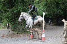 Jumping!!!! Flowerhill Equestrian Centre, Ireland