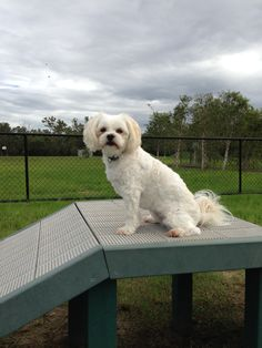 Charley at the dog park.