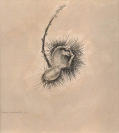 image of still-life goldpoint and silverpoint drawing Autumn Study #1 by David Ladmore