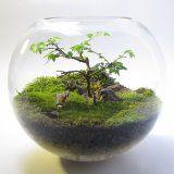 『コケリウム』草深い森の景色を机の上で『テラリウム』