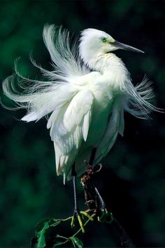 Gorgeous egret in Pinglin, Taipei County, Taiwan • photo: John&Fish on Flickr