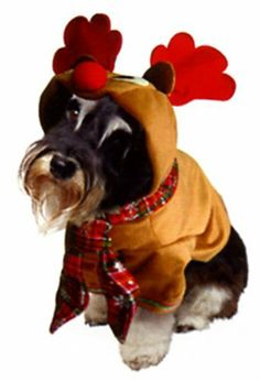 Dogs & Co Christmas Fancy Dress Costumes for Dogs Reindeer Outfit, 12-inch/ 30 cm by Dogs & Co., http://www.amazon.co.uk/dp/B009GGY4WY/ref=cm_sw_r_pi_dp_D-5Psb1GX2JCX