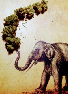 www.mainstreetcannabistrinidad.com #msc #mainstreetcannabis #420 #weed #cannabis #trinidad #420 #dabs