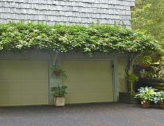 Climbing hydrangea over an arbor. Mine is close to reaching the top of my pergola. Eventually will spread all along it like this. See how lower trunk is limbed up all the way to where it reaches the arbor? Outdoor Decor, Climbing Hydrangea, Deck With Pergola, Pergola Shade Cover, Garage Doors, Pergola Lighting, Garage Pergola, Front Yard, Garage Door Paint