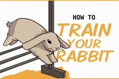 You can train your rabbit to do anything from coming back to their enclosure and giving you high fives, to running through an entire agility course. Diy Toys For Rabbits, Pet Bunny Rabbits, Rabbit Toys, Pet Rabbit, Indoor Rabbit House, Bunny Rescue, Rabbit Facts, Flemish Giant Rabbit, Bunny Room