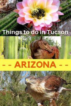 Southwest USA road trip to Tucson Arizona | Best things to do and see in Tucson | Where to stay | Bars & Restaurants | Best Hiking | Wildlife | Museums & Art | Travel guide Tucson