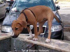CAPODIMONTE (NAPOLI): SMARRITA JULY, CANE METICCIO MARRONE http://www.terzobinarionetwork.com/2015/10/capodimonte-napoli-smarrita-july-cane.html
