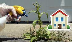 """Ecco una """"ricetta"""" facilissima per eliminare le erbacce che infestano il nostro giardino. Risultati garantiti"""