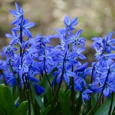Early Bloomers: 7 Spring Flowers Bringing Color NOW to a Yard Near You!