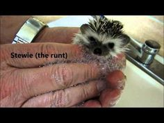 8 adorable videos of baby animals taking baths | MNN - Mother Nature Network