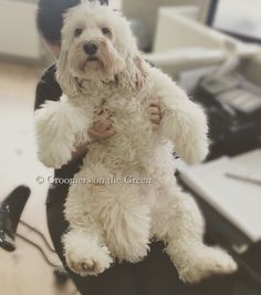 29 best dog grooming images on pinterest dog grooming dog cuddles before bath time solutioingenieria Image collections