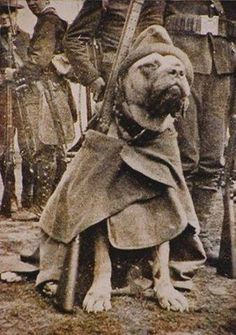 Sergeant Stubby was the most decorated war dog of World War I, and the only one to be promoted to sergeant in the field after he successfully located and captured a German spy.