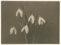 Sneeuwklokjes, Richard Tepe, 1900 - before 1915