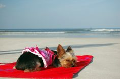 Bring your best friend to the beach, some of the nicest suites at Beacher's Lodge are pet friendly.