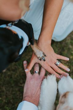 How to incorporate Dogs in your wedding photos. Dog Family wedding Photos, Paw a… So integrieren Sie Dogs in Ihre Hochzeitsfotos. Hundefamilie Hochzeitsfotos, Paw and Hands Hochzeitsfotos, Wedding Picture Poses, Wedding Photography Poses, Wedding Pictures, Wedding Family Photos, Funny Wedding Poses, Dog Wedding, Wedding Humor, Dream Wedding, Wedding Cake