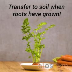 Grow your own plants 🌱 plant hacks! Clever plant hack you should try today. plant hack tips Regrow Vegetables, Growing Vegetables, Growing Plants Indoors, Planting Succulents, Planting Flowers, Container Gardening, Gardening Tips, Vegetable Garden Design, Plantation