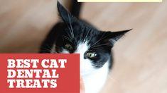 Best Cat Dental Treats Dental Health, Dental Care, Cat Diet, Cool Cats, Kittens, Treats, Top, Oral Health