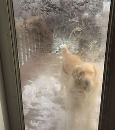 My dog thinks 9 degrees is perfect weather for some dog-ball http://ift.tt/2iobwn0