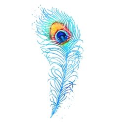 Watercolor peacock feather vector - by jetFoto on VectorStock®
