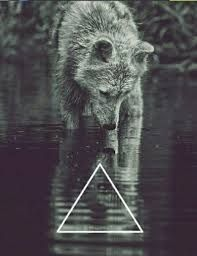 New wall paper phone hipster wolves ideas Iphone Wallpaper Tumblr Hipster, Wallpaper Iphone Disney, Iphone Wallpapers, Teen Wolf, Wallpaper Fur, Trendy Wallpaper, Animal Photography, Nature Photography, Photo Bretagne