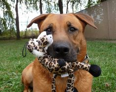 Blue, the Dog with his Cuddly Toy Tiger Friend.