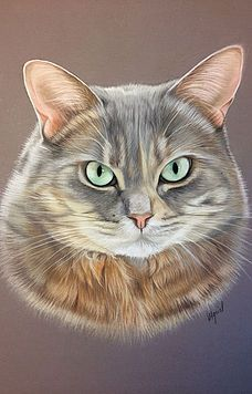 Chat Somali, Chat Maine Coon, Animal Drawings, Drawing Animals, Beautiful Cats, Cat Art, Pet Portraits, Cute Gifts, Painting