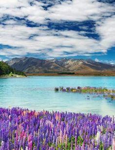 Lake Tekapo obtém sua intensa coloração turquesa opaca através da farinha de rocha refinada (terra proveniente de geleiras), que fica suspensa na água.