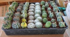 Wedding Favor Cactus Collection  THIRTY SIX 36 by SANPEDROCACTUS, $42.00 Succulent Wedding Favors, Cactus Wedding, Cactus For Sale, Boho Themed Party, Wholesale Succulents, Cactus Types, Order Up, Terracotta Pots, Grow Hair