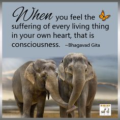 """When you feel the suffering of every living thing in your own heart, that is consciousness."" ~Bhagavad Gita —"