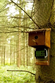 Bird house geocache