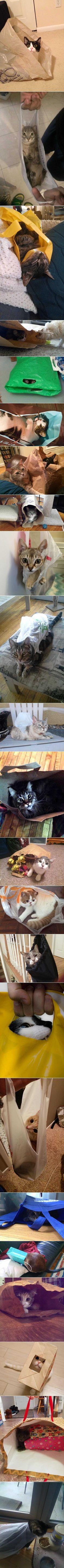 Katzen und ihr liebstes Spielzeug. Tüten. | Webfail - Fail Pictures and Fail Videos