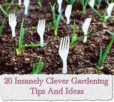 20 Insanely Clever Gardening Tips And Ideas,This will help us save time and money.You'll be asking yourself 'why did I never think of that?