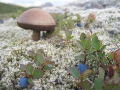 Favorite fall activities in Alaska: Mushroom hunting & Blueberry picking!
