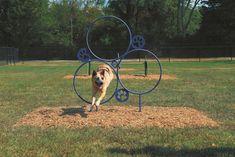 Dog Hoop Jump
