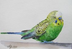 Budgie Original watercolor paintings Handmade 6x