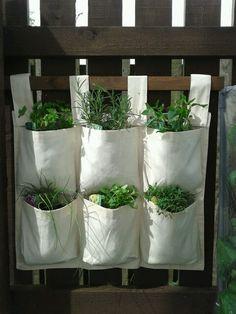 Hanging herb garden Indoor Tree Plants, Trees To Plant, Hanging Herbs, Herb Garden, Planting, Planter Pots, House, Plants, Home