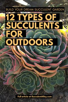 12 Types of Succulents for Outdoors for an Awe-Inspiring Garden - Succulent Alley Succulent Terrarium, Succulent Plants, Succulent Outdoor, Cacti Garden, Cactus Plants, Types Of Succulents, Planting Succulents, Garden Plant Stand, Plant Stands