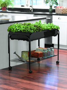 Indoor Vegetable Gardening Indoor Gardening: Ideas to Grow Food Inside - Indoor gardening is fun and a great way to have fresh food. These indoor gardening ideas and set ups can be simple or hydroponics Indoor Vegetable Gardening, Vegetable Garden Design, Hydroponic Gardening, Container Gardening, Organic Gardening, Urban Gardening, Herb Garden Indoor, Raised Herb Garden, Aquaponics Greenhouse