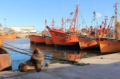 Lobo marino en el puerto