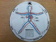 cours du système circulatoire