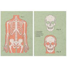 Anatomy Tea Towel Set - Skeletal System from Present Indicative