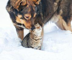 #dog #cat #zolux